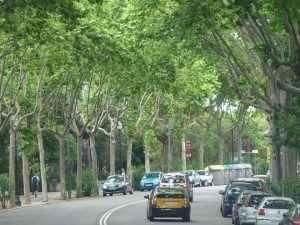 Figura 2 Avinguda Miramar parc del Montjuïc de Barcelona Foto pròpia