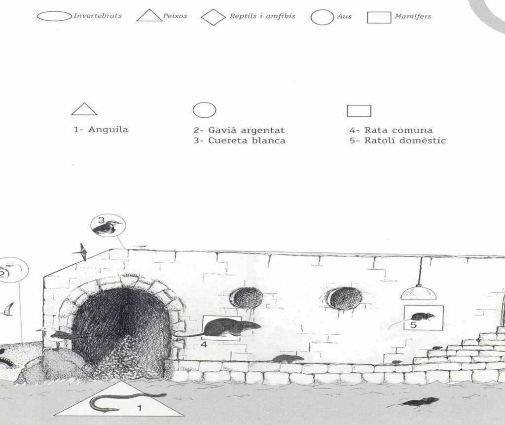 sistemes subterranis