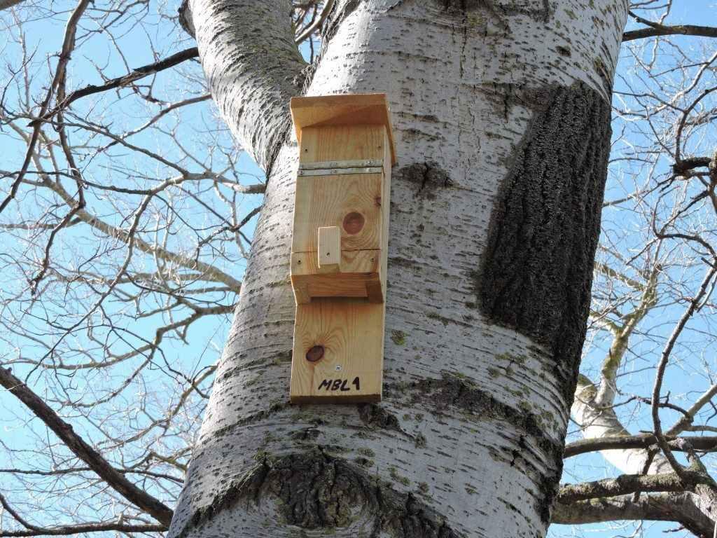 Caixa refugi de fusta per a ratpenats, col·locades en arbres.