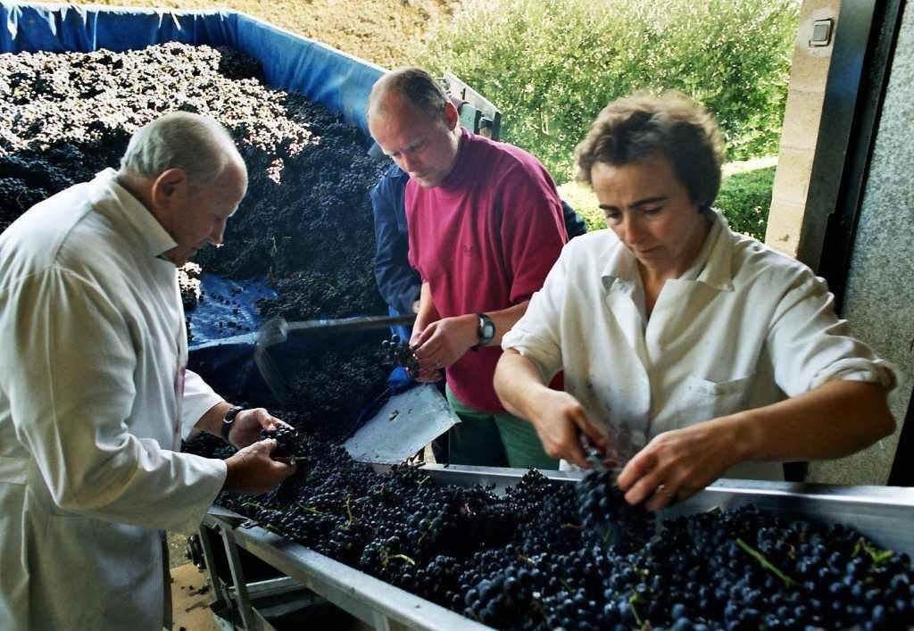 Seleccion uvas