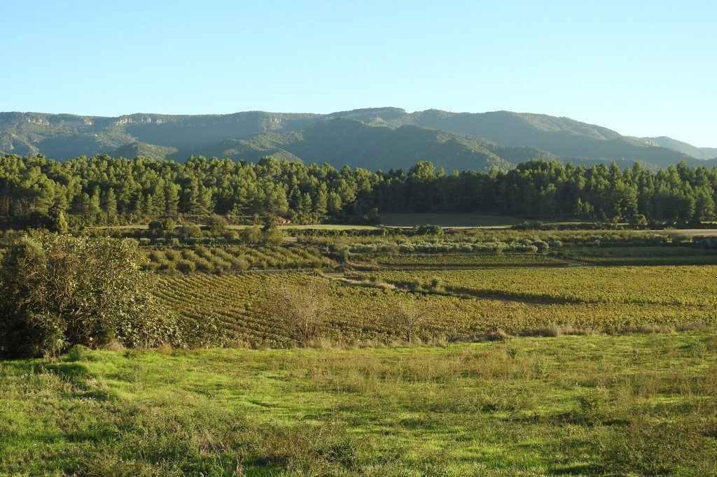 Vista dels conreus%2c pinar i bosc de Poblet al fons
