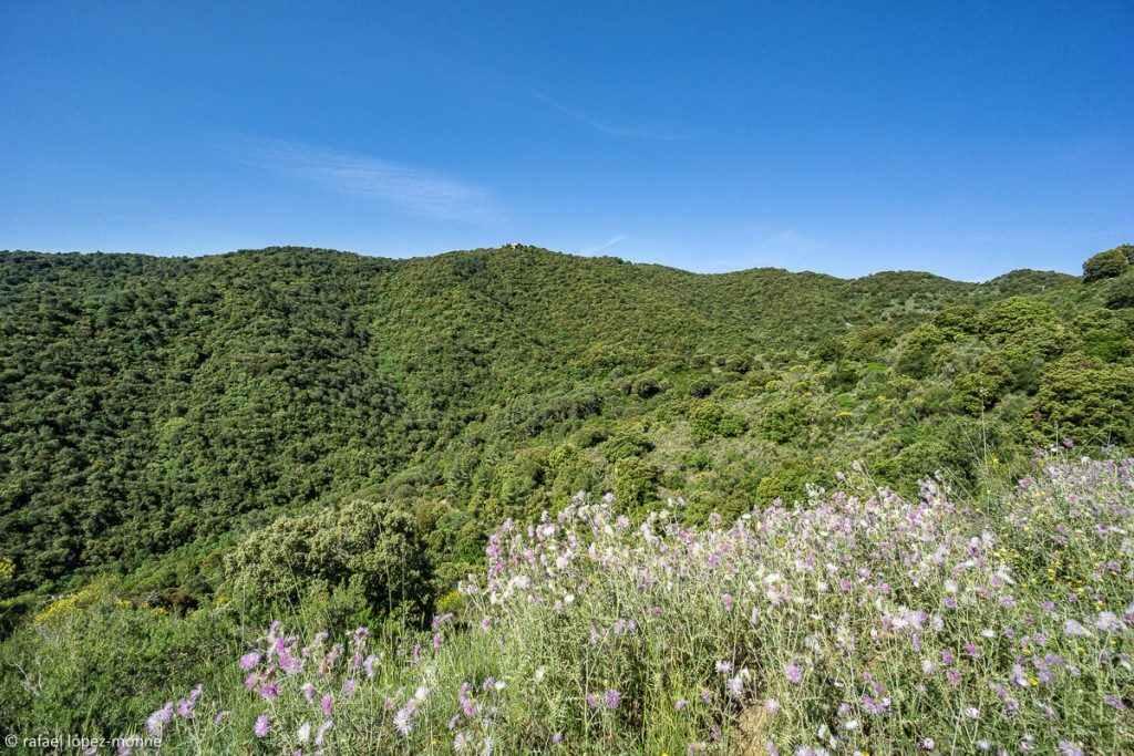 Bosc de Puicerver. Alforja. Baix Camp, Tarragona